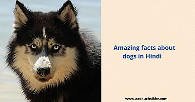 Facts about dogs in Hindi