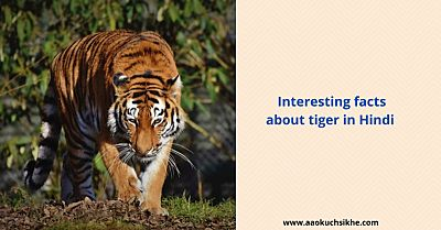 Facts about tiger in Hindi