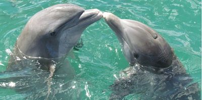 Facts about Dolphin in Hindi