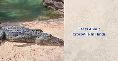 Facts about Crocodile in Hindi