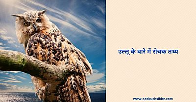 Interesting facts about owl in Hindi