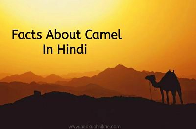 Facts about Camel in Hindi