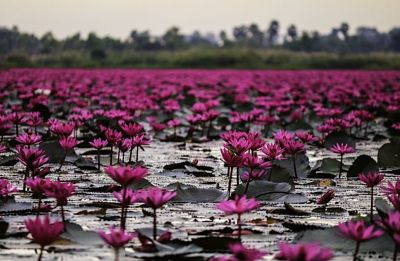 Most Beautiful Flowers In The World In Hindi