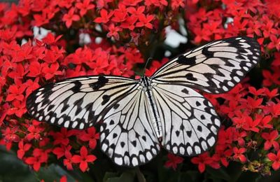 Amazing Facts About Butterfly In Hindi