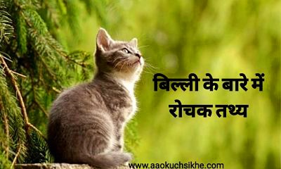 Facts about cat in Hindi