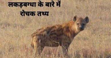 About Hyena in Hindi