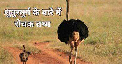 Facts about ostrich in Hindi
